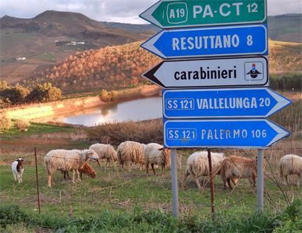 Dante sheep italy