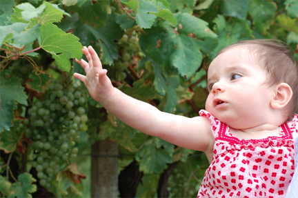 baby in the vineyards