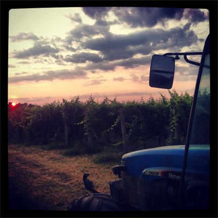 dawn in the vineyard italy