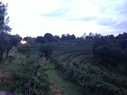 amphitheater vineyard