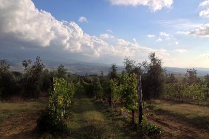 val orcia tuscany wine