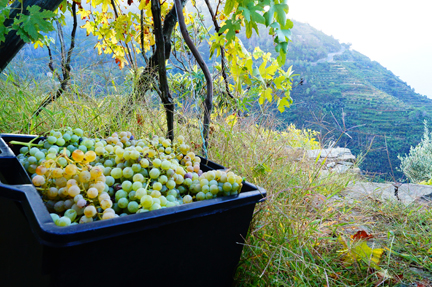 italy vintage 2013 harvest notes