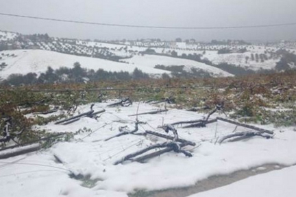abruzzo snow blizzard vineyard