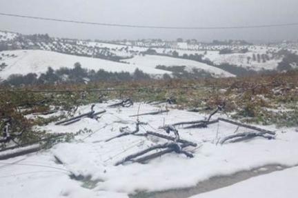 abruzzo snow blizzard vineyard