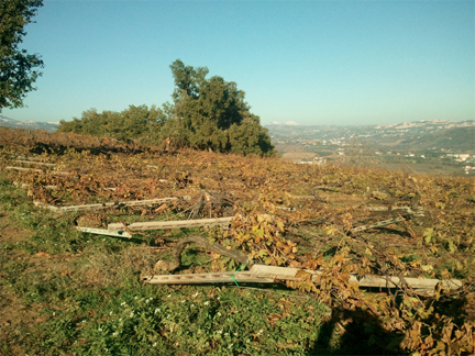 valentini vineyards destroyed