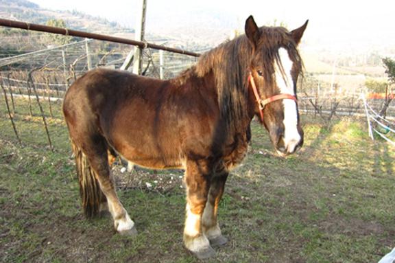 wine horse italy