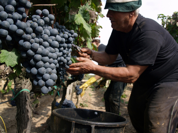 best negroamaro harvest 2014