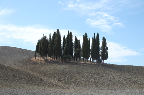 tuscan cypress trees montalcino