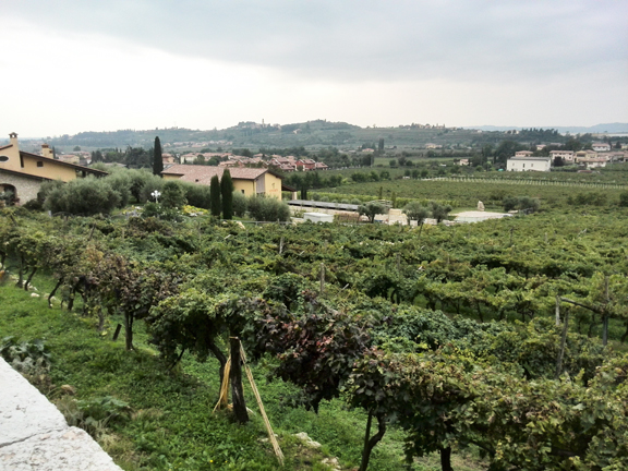 hillside vineyard valpolicella amarone