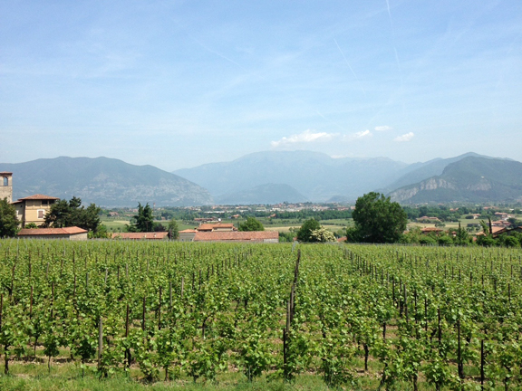 ronco calino franciacorta winery