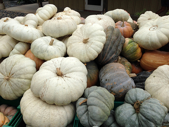 buy thanksgiving ornamental pumpkins