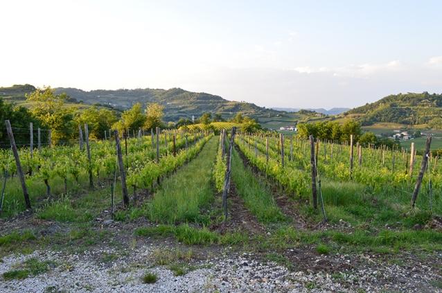 maule biancara vineyards winery