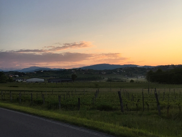 slovenia wine brda rebula