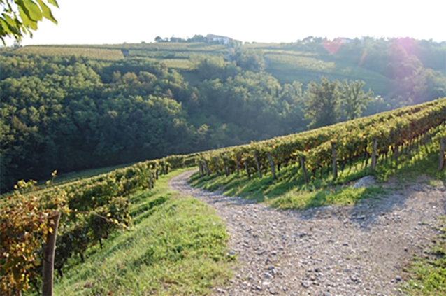 radikon-wine-vineyard-oslavje