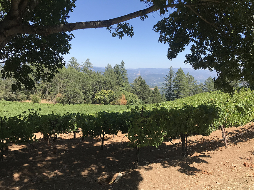 Apotheosis: Napa Valley finds one of its greatest expressions in Philip Togni