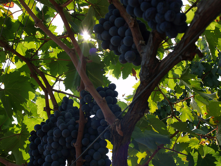 It's time to change a racially insensitive Italian grape name.